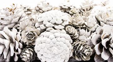 Veniec z bielych borovicových šišiek 30cm